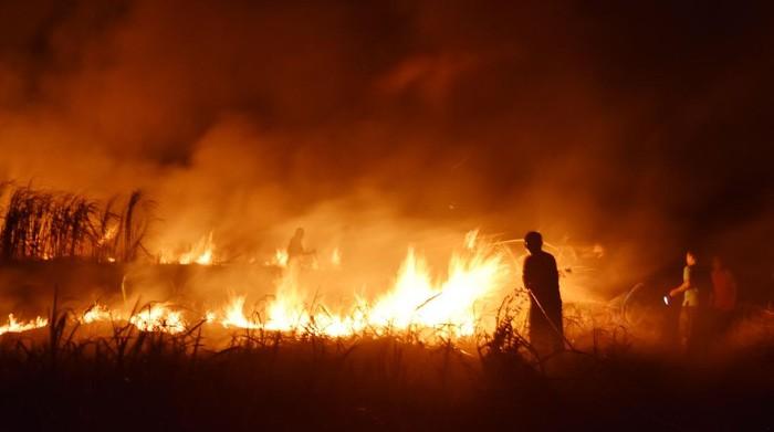 Sejumlah warga memadamkan api dengan peralatan seadanya saat terjadi kebakaran lahan tebu di atas areal aset milik Pemkot Madiun, Jawa Timur, Rabu (30/9/2020) malam. Kebakaran lahan tebu yang disewa sebuah pabrik gula di Madiun yang sebagian besar sudah dipanen tersebut diduga akibat sengaja dibakar oleh orang yang tidak bertanggung jawab. ANTARA FOTO/Siswowidodo/foc.