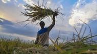 Hari Pangan Sedunia: Mengintip Stok Pangan RI di Kala Pandemi