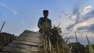 Jumlah Petani Turun Dibanding 2019, Solusinya Ada Regenerasi