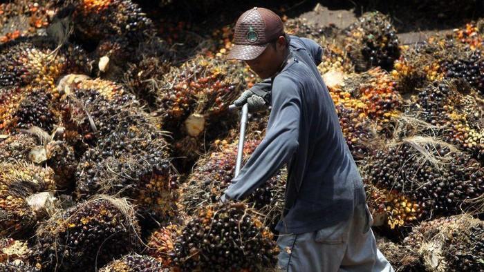 Dituduh AS terjadi kekerasan fisik dan seksual dalam praktik kerja paksa di perkebunan sawit, Malaysia selidiki satu perusahaan