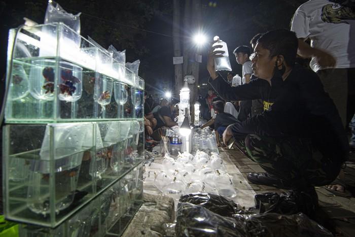 Sejumlah warga mengamati ikan-ikan cupang yang dipasarkan di Lapangan Parkir Pasar Ikan Hias Jatinegara, Jakarta.