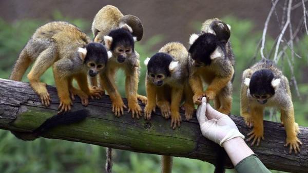 Kelahiran hewan baru di kebi=un binatang Taipei diharapkan akan membantu meningkatkan masyarakat akan kesadaran konservasi. (AFP)