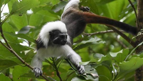 Pihak kebun binatang mengumpulkan hewan-hewan eksotik dalam satu abad terakhir untuk membantu mencegah kepunahan hewan. (AFP)