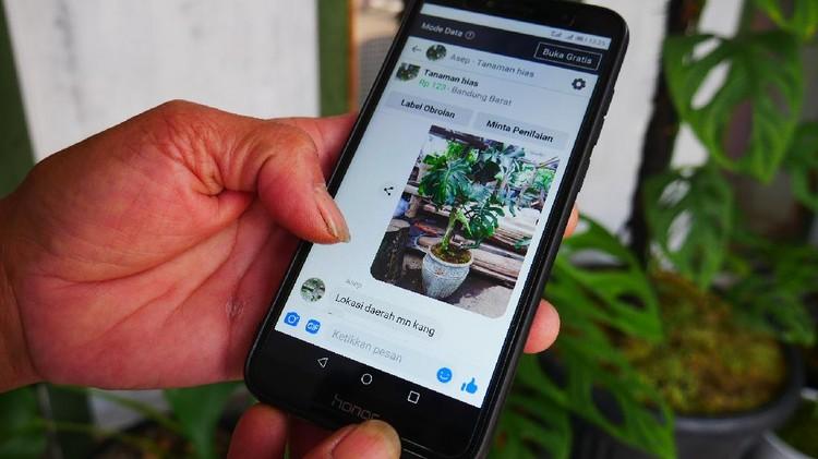 Jualan Online Tanaman Hias - Bandung
