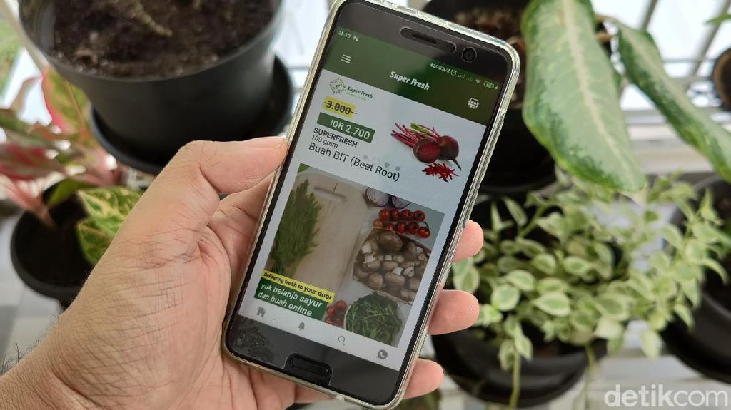 Kisah Petani Blitar Go Digital, Jual Sayur Pakai Aplikasi