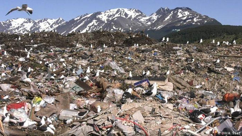 Duh! Habitat Penguin di Ujung Dunia Terancam Sampah Plastik