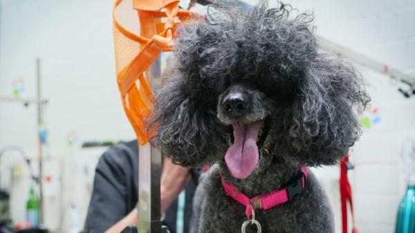 Anjing punya naluri yang bagus. Dia bisa mengerti apa yang dirasakan manusia, lho. (ABC Australia)