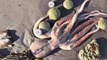 Bencana Ekologis Bunuh Hewan Laut dan Ganggu Peselancar di Pantai Rusia