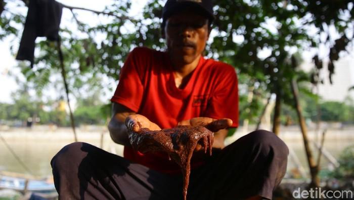 Ramainya jual-beli ikan hias membuat para pemburu cacing sutra meraup untung. Salah satunya warga Kampung Cacing di Tangerang, yang mendapat berkah di tengah pandemi.