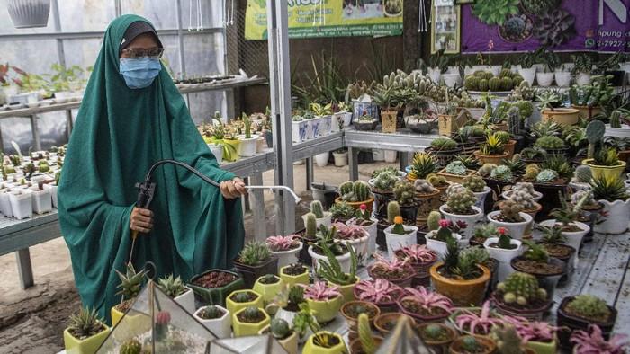 Calon pembeli memilih tanaman kaktus mini,  di Kampung Kaktus Palembang, Sumatera Selatan, Selasa (6/10/2020). Petani mengaku, penjualan tanaman kaktus mini yang dijual dengan harga Rp.35 ribu per batang hingga Rp.2 juta tersebut mengalami peningkatan sebesar 200 persen seiring kembali maraknya hobi menanam bunga di tengah pandemi COVID-19. ANTARA FOTO/Nova Wahyudi/hp.