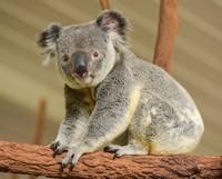Kumpulan Hewan Telah Ada di Bumi Lebih Lama Dari Manusia