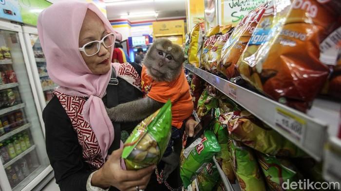 Seekor monyet ekor panjang bernama Bombom diajak pemiliknya Andi berbelanja di minimarket di Cikarang, Jawa Barat. Yuk lihat.