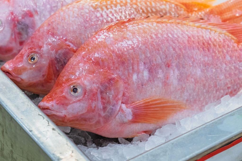 Ikan NIla Bakar Pedas Manis