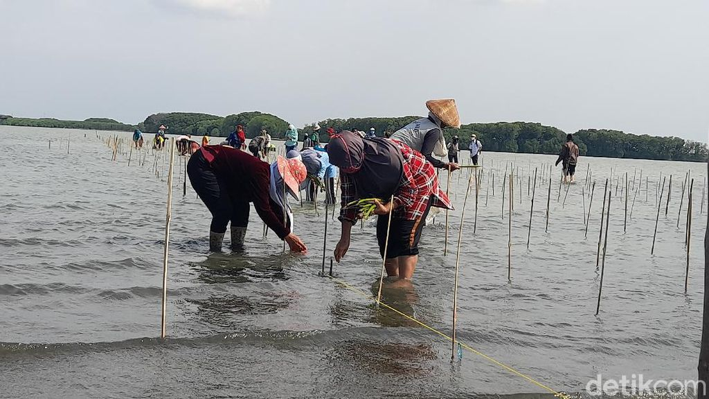 600 Ribu Hektare Kawasan Pantai Rusak, Paling Parah Papua-Maluku