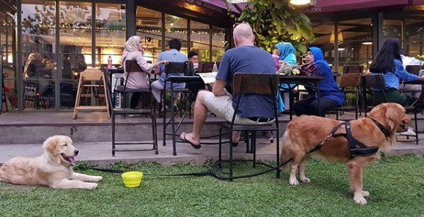 5 Kafe Ramah Anjing Peliharaan di Tangerang
