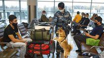 Begini Lho Proses Latihan Anjing Pendeteksi Corona di Rusia