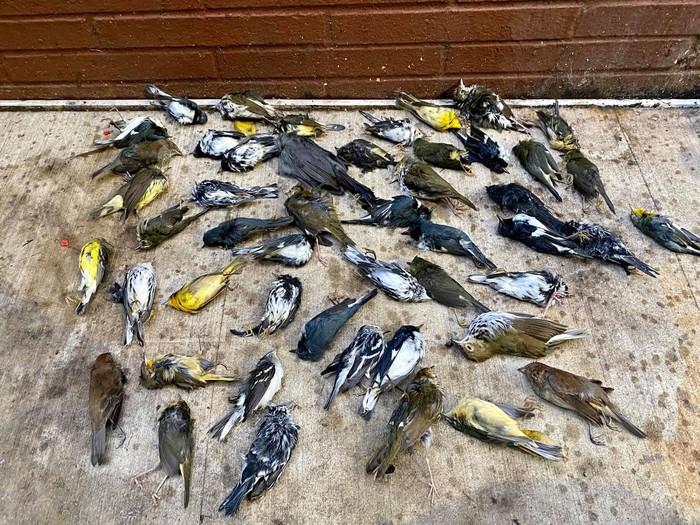 Burung mati massal