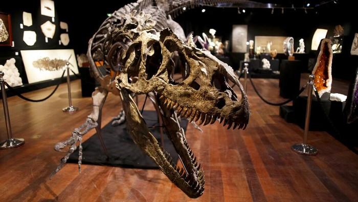 Kerangka dinosaurus berjenis Allosaurus akan dilelang di Prancis. Diperkirakan harga kerangka itu mencapai 1,2 juta euro.