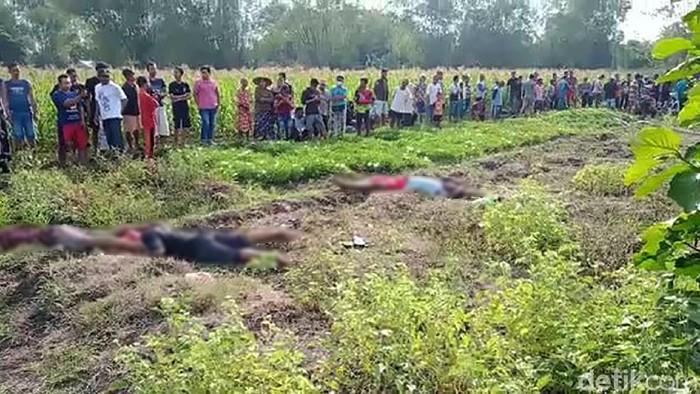 Satu keluarga di Bojonegoro tewas tersetrum jebakan tikus listrik. Berikut foto-foto lokasi TKP yang berada di persawahan.