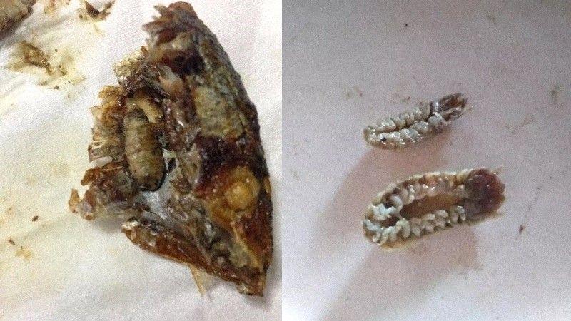 Ngeri! Wanita Ini Temukan Kutu Pemakan Lidah saat Makan Ikan