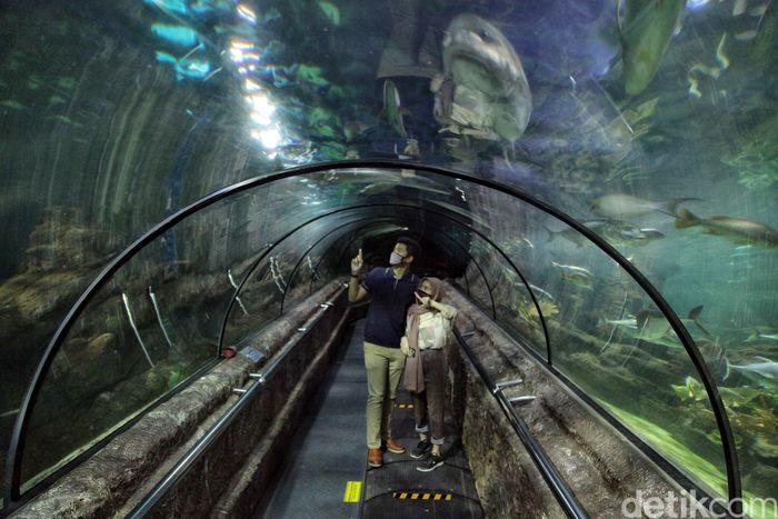Gubernur DKI Jakarta Anies Baswedan menerapkan PSBB transisi. Tempat wisata pun dibuka kembali, salah satunya Sea World Ancol.