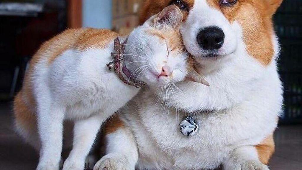 Potret Persahabatan Hewan Beda Spesies yang Menggemaskan