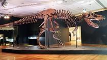 Kerangka T-rex Ini Jadi Fosil Termahal Dunia, Laku Rp 467 M