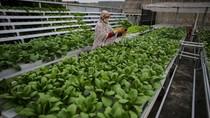 BPS Catat Ekspor Pertanian September Naik 20,86%