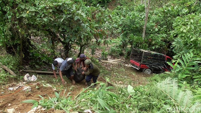 Pikap bermuatan 25 ekor babi masuk jurang di Polman, Sulbar (Abdy-detikcom).
