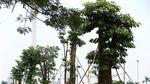 Foto Wajah Baru Taman Monas Setelah Direvitalisasi
