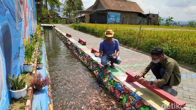 Wisata edukasi budidaya ikan di Magelang