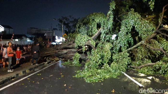 3 pohon beringin depan TMP Bogor tumbang, arus lalin tertutup