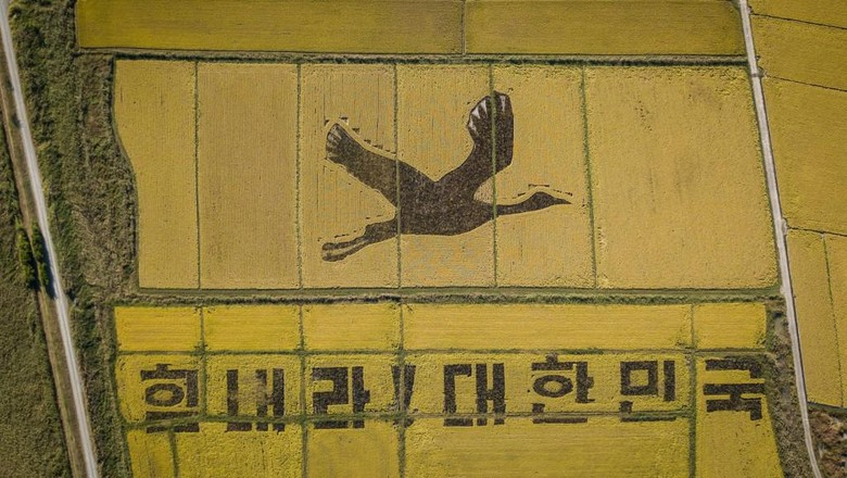 Bangau raksasa di Suncheon, Korsel