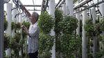 Kontainer Bekas Ini Jadi Lahan Beternak dan Berkebun