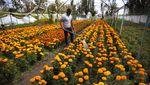 Pegulat di Meksiko Banting Setir Jadi Petani Bunga Gegara Corona