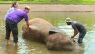 Celebrity on Vacation: Sensasi Mandiin Gajah di Badung Bali