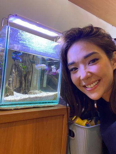 Ikan cupang koleksi Gisella Anastasia