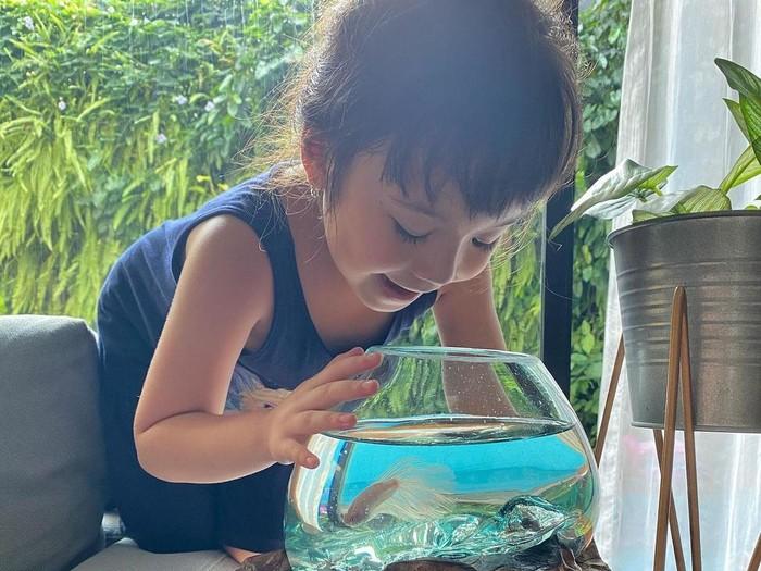 Cerita Gisella Anastasia Kecanduan Pelihara Ikan Cupang Saat Pandemi Corona