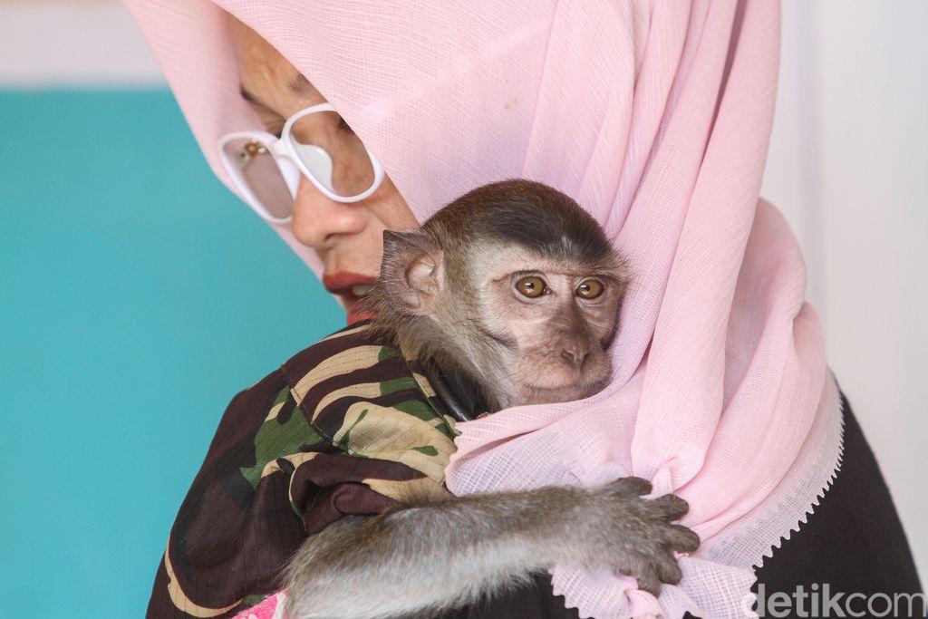 Siapa sangka monyet lucu nan sehat di Karawang ini dulunya merupakan monyet terlantar yang dibuang manusia. Ada kisah panjang di balik penyelamatan primata tersebut.