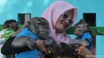 Monyet Lucu di Karawang, Dulu Dibuang Kini Disayang