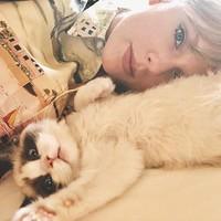 Taylor Swift juga punya hewan peliharaan bernama Benjamin, seekor kucing. Mereka bertemu di salah satu set videonya Taylor saat syuting.