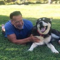 Di tengah pandemi, Sang Terminator atau Arnold Schwarzenegger mengadopsi anjing berusia 1 tahun bernama Dutch. Lucunya!