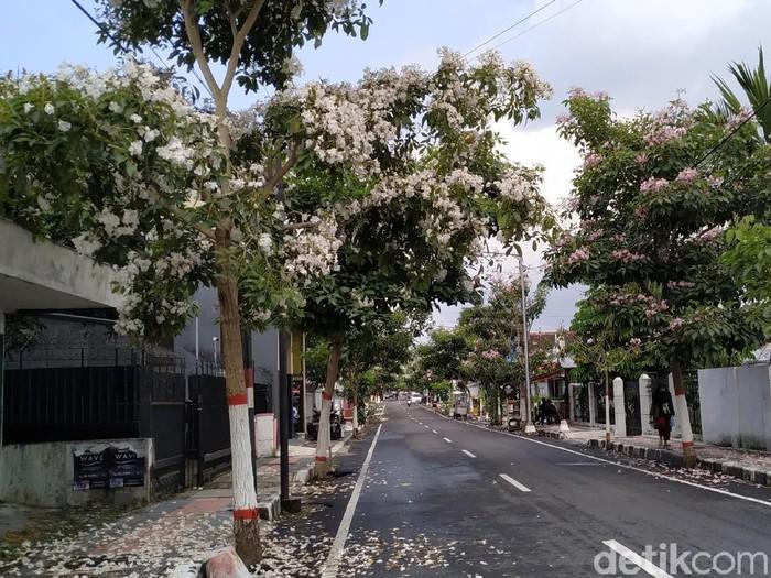 Tabebuya Berguguran di Jalanan Kota Blitar