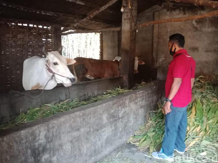 6 Sapi Warga Satu Kampung di Jombang Dicuri dalam Semalam, Korban Rugi Rp 96 Juta