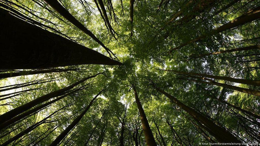 Ilmuwan: Hutan yang Asri adalah Solusi Atasi Kemiskinan