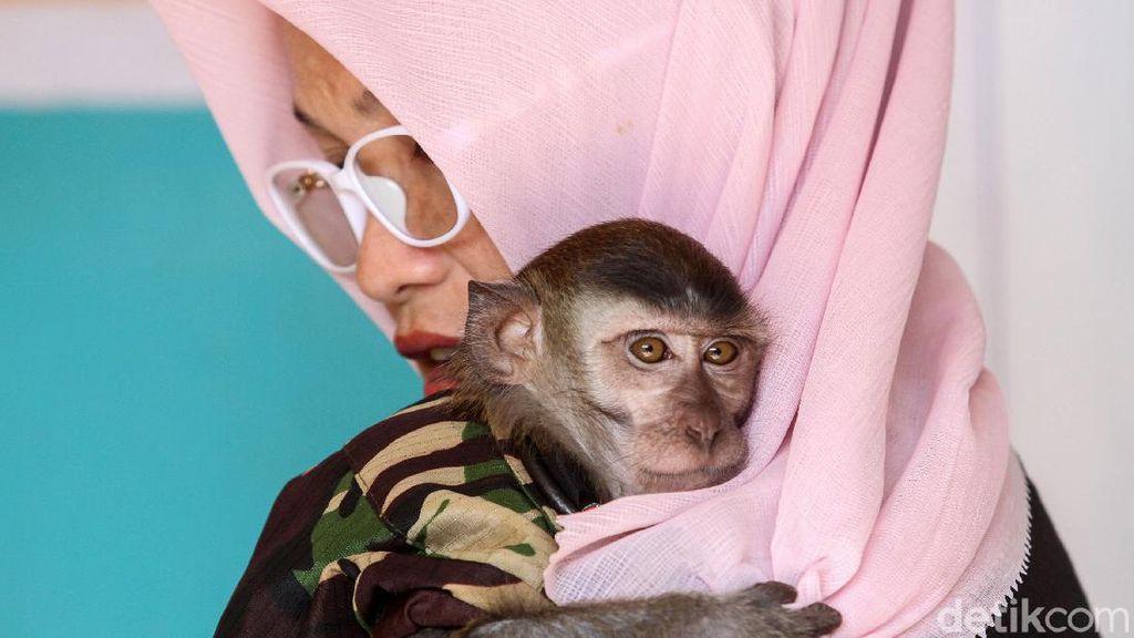 Kisah Andi Merawat 9 Monyet di Karawang
