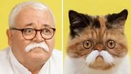 Potret Gemas Kucing dan Manusia yang Seperti Kembar