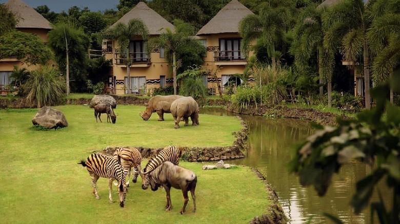 Tempat wisata safari di Bali.