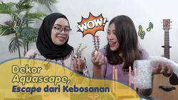 Belanja Online Biar Nggak Bosan, Dekor Aquascape Aja