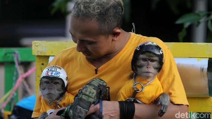 Salah satu Monkey Lovers asal Karawang, Aaro Chan memelihara dua ekor monyet yang diberi nama Cio dan Juno. Monyet-monyet itu selalu didandani layaknya manusia.